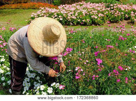 Gardener at work. Gardener trimming at flower garden.