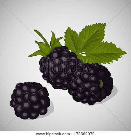 Bright juicy blackberry on grey background. Sweet delicious for your design in simple cartoon style. Vector illustration. Berries Collection.