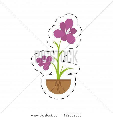 amaryllis flower decoration growing vector illustration eps 10