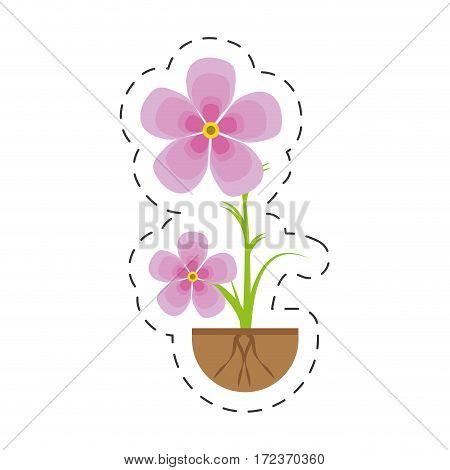 magnolia flower flora growing vector illustration eps 10