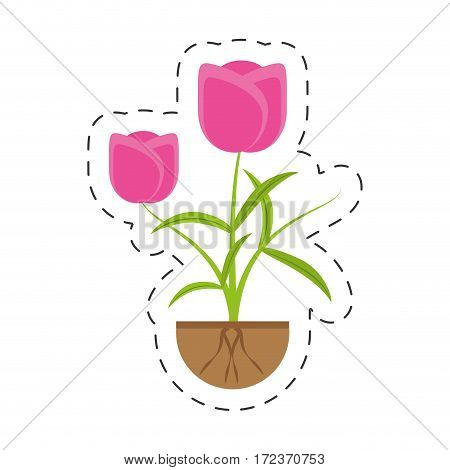 tulip flower growing plant vector illustration eps 10