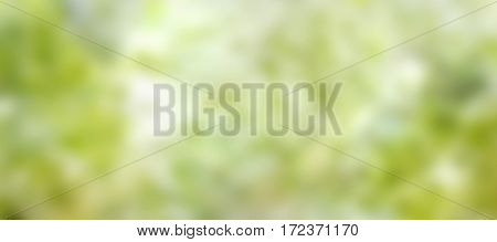 Fresh green spring background panorama with sun