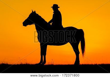 Rider Man And His Horse In The Sunset