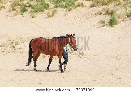 Texel, Netherlands, August 1, 2015: Horse with rider on the North Sea Texel beach