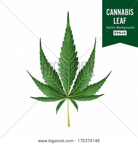 Cannabis Vector. Medical Green Plant Illustration Isolated On White Background. Cannabis Graphic Design Element For Printables, Web, Prints