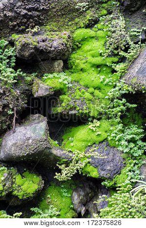 The Wet Green Moss On Dark Rocks