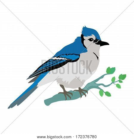 Blue jay vector. Birds wildlife concept in flat style design. North America fauna illustration for prints, posters, childrens books illustrating. Beautiful jay bird seating on brunch. Isolated.