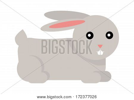 Rabbit cartoon isolated on white. European rabbit, cottontail rabbit, Amami rabbit. Pika and hare. Male is called buck and female is doe, a young rabbit is kitten or kit. Sticker for children. Vector