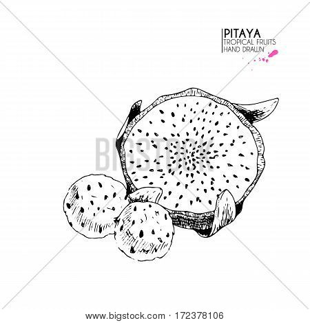 Vector hand drawn set of exotic fruits. Isolated pitaya. Engraved art dragon fruit. Delicious tropical vegetarian objects. for restaurant meal market store menu party decoration smoothie bowls.