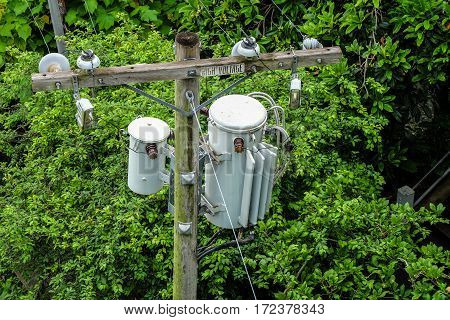 Electric utility poles with transformers among a trees