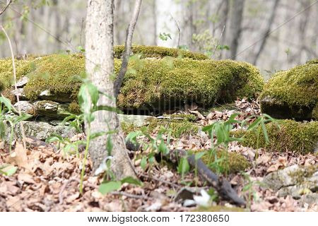 Moss covering large rocks in a forested area.