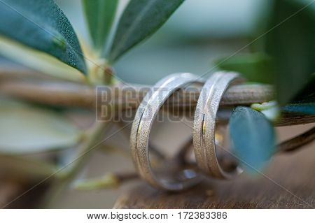 Wedding rings on the olive tree branch