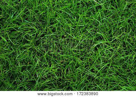 moist Green grass for football ground textures
