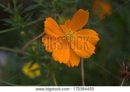 close up orange flower in the garden