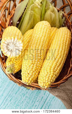 Basket of fresh sweetcorn husked. no people