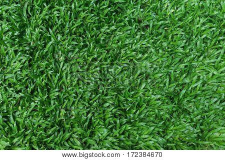 moist green grass for football ground texture