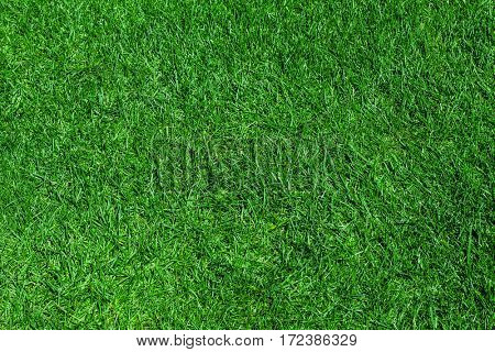 Green grass natural background.
