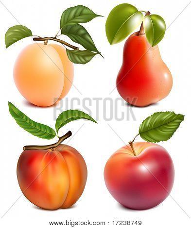Photo-realistic vector fruits.