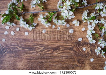 Border from fresh fragrant flowers cherry on retro background. Space for text. Blooming cherry with a shade on a wooden surface