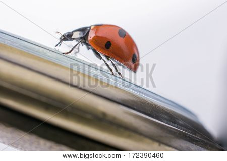 Beautiful Red Ladybug Walking Around Objects