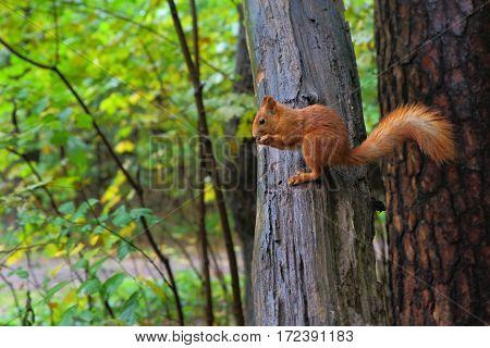 Bright, small, very fast small mammal caught on the bark of a tree.