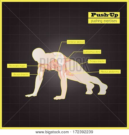 Antagonistic muscle exercises and Workouts sport vector