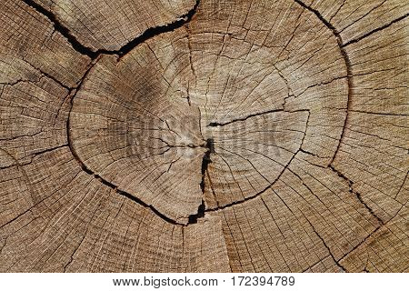Wood Background: Weathered Oak Tree Cross-Section Closeup