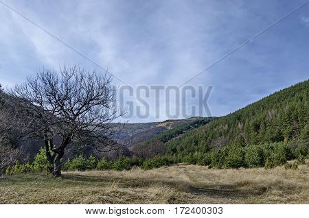 Panorama of glade and  late autumn forest in Vitosha mountain, Bulgaria