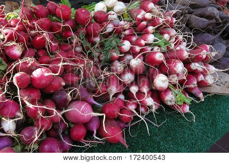 Large pile of freshly harvested plump red radishes for sale at farmer's market