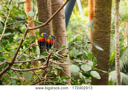Colorful Parrot in Loro Park in Tenerife Canary islands Spain
