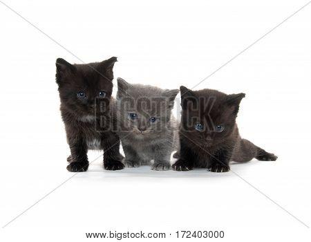 Three Cue Kittens