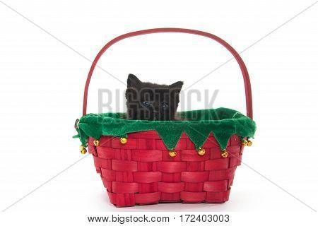 Cute Black Kitten In Basket