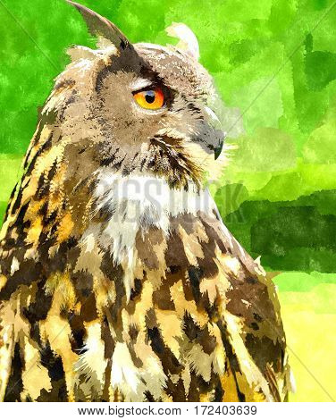 Watercolor digitally generated painting of the Eagle Owl (Bubo Bubo).