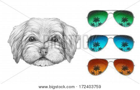 Portrait of Havanese with mirror sunglasses. Hand drawn illustration of dog.