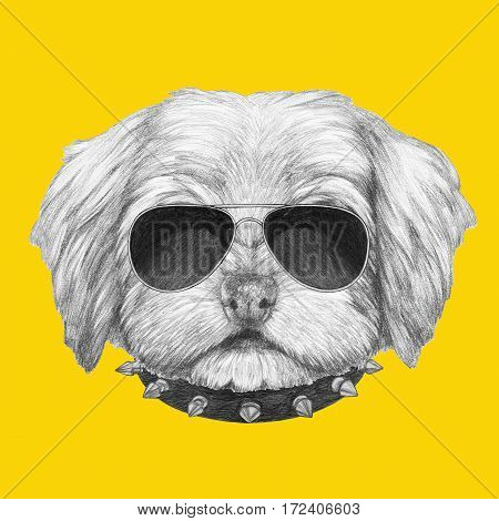 Portrait of Havanese with sunglasses and collar. Hand drawn illustration.