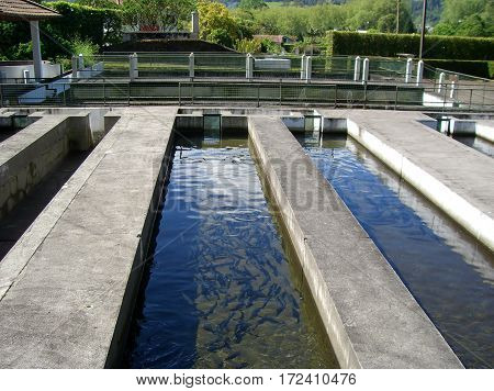 Tanks for breeding trout. tembawang  of Furnas. Parish of Furnas, Sao Miguel Island, Azores, Portugal