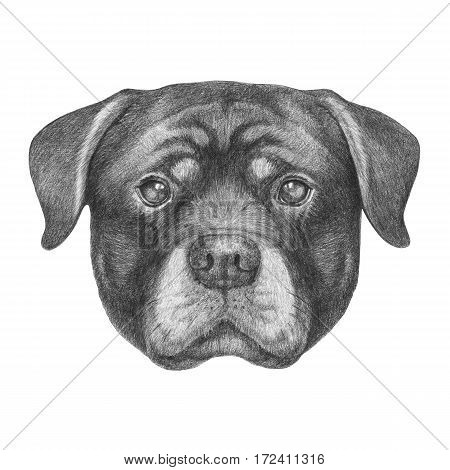 Portrait of Rottweiler. Hand drawn illustration. Pets.