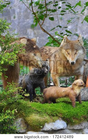 the taxidermy animals Abkhazia attraction for tourists