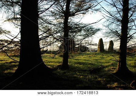 Aikey Brae Stone Circle viewed through conifer trees.