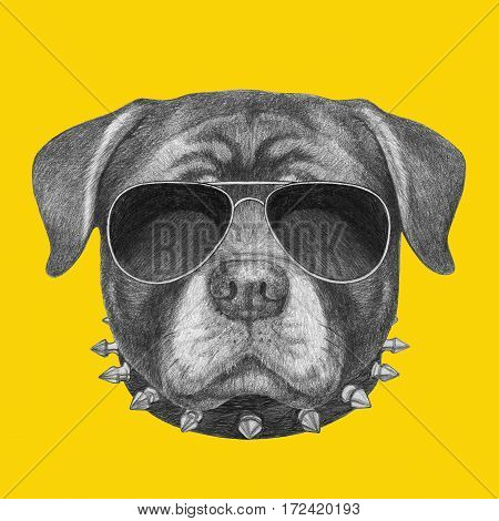 Portrait of Rottweiler with sunglasses and collar. Hand drawn illustration.