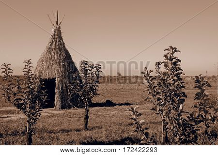 Teepee aka wigwam in the field with young trees. Vintage sepia toned image.