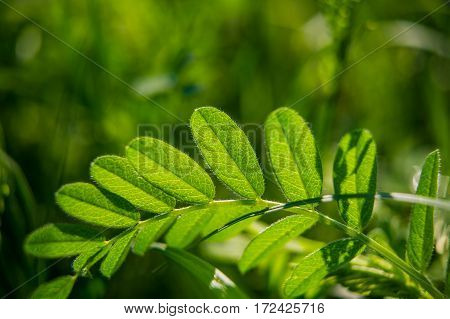 green leaves on a blurred green background
