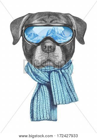 Portrait of Rottweiler with ski goggles and scarf. Hand drawn illustration.