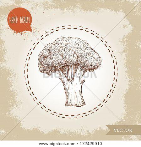 Hand drawn sketch style illustration of broccoli. Healthy food vintage vector illustration