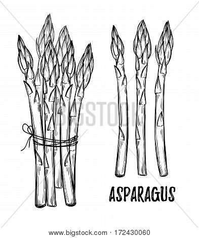 Hand Drawn Vector Illustrations - Asparagus Collection. Design Elements In Sketch Style. Perfect For