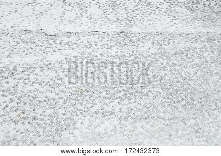 On the riverducks in the snow left traces of their feet.