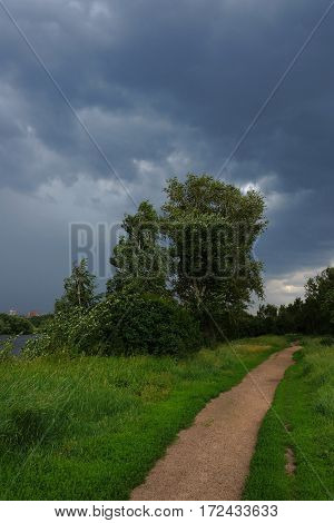 Before the storm. Summer landscape. The tree in the wind