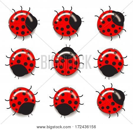 Ladybug icons. Flat designed round ladybugs with glares and shadows, crawling in different directions. Simple vector decoration.