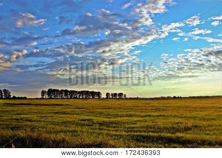 agriculture, background, barley, beautiful, beauty, blue, cloud, clouds, cloudy, country, countryside, crop, dusk, environment, evening, farm, farming, farmland, field, flower,