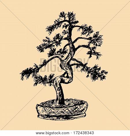 Pine tree bonsai. Hand draw. Vector illustration.